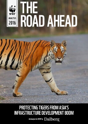 The Road Ahead: Protecting tigers from Asia's infrastructure development boom
